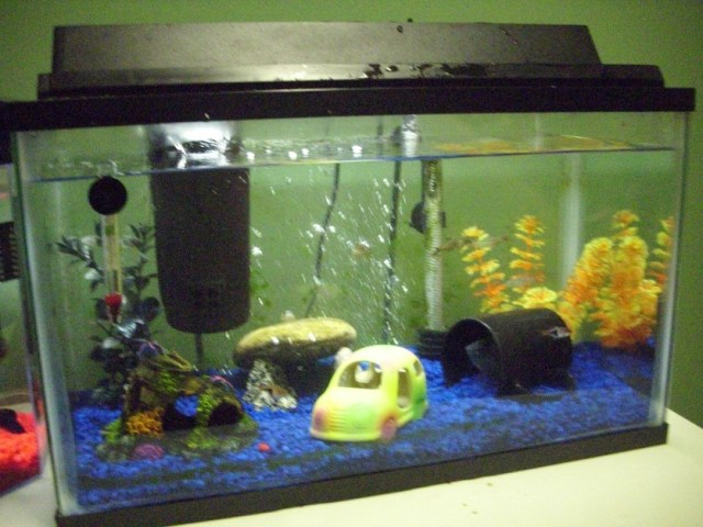 10 gallon fish tank examples tank examples for Google fish tank mrdoob