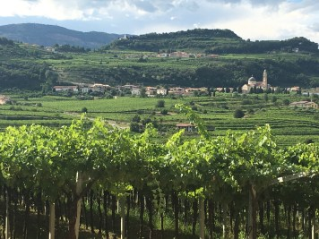 Valpolicella vineyard. Yes, we tasted. Call it intellectual curiosity.