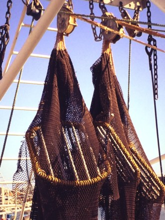 Bycatch Reduction Devices (BRD's)