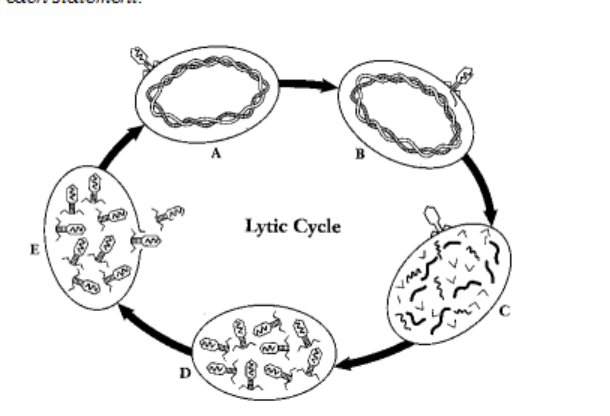 biology chapter notes and handouts