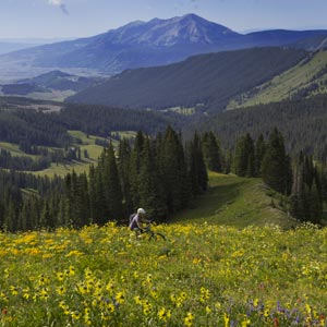 403 mountain bike trail, Washington Gulch, Crested Butte