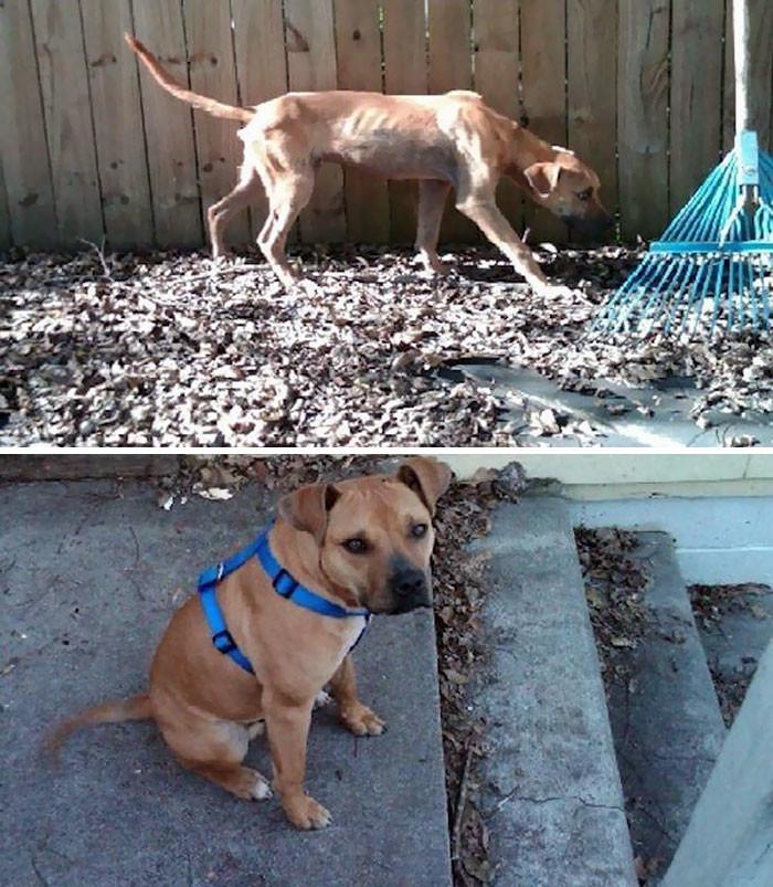 Еще один пес, спасенный от голода Счастливый конец, собаки, спасение