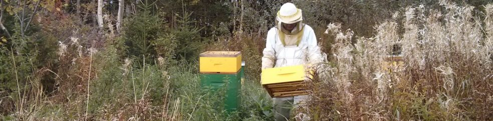 Image For Mud Songs Keeping Honey Bees On The Isle Of Newfoundland