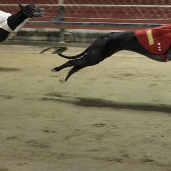 Greyhound Racing in Macau at the Macau (Yat Yuen) Canidrome Co. Ltd. 28MAY11 (For Post Magazine 05/06/2011)