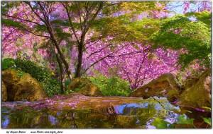 japanese_gardens_2014