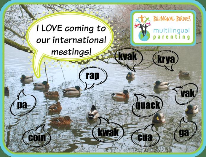International duck meeting