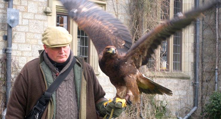 Falconery display at Bovey Castle. Copyright Gretta Schifano