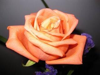 peach-rose.jpg