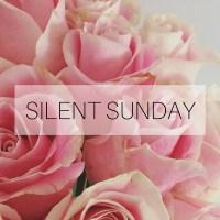 Silent Sunday: 29 November 2015