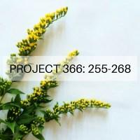 Project 366: Week 37-38: 255-268