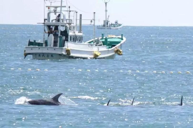 Cerca de dez barcos participaram do primeiro dia da temporada de pesca de golfinhos em Taiji (Foto: kyodo)