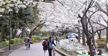 Parque Ueno, em Tóquio (Foto: Tokyo Fashion)