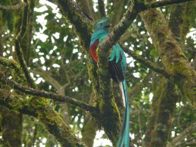 """""""El Quetzal en todo su esplendor"""". Fotografía de David Rodríguez."""