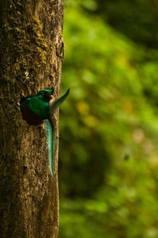 El Quetzal, foto por Alan Lacayo Odraudes 2