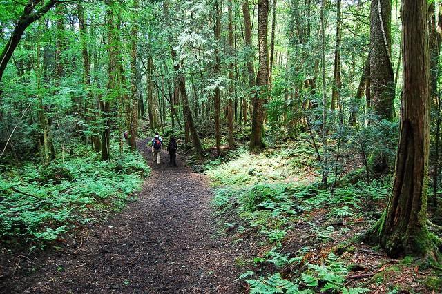 Porque provoca suicidarse en El bosque de los suicidios en Japón ¡¡¡