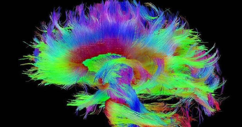 Connectome-1 Científicos de Harvard creen haber identificado la fuente física de la consciencia