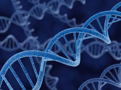 DNA-Strand Ingeniería genética en la antigüedad