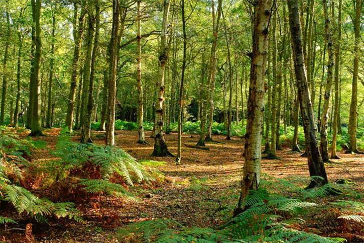 bosques-malditos-del-mundo-3 Bosques malditos del mundo