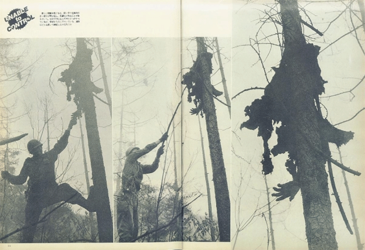 bosques-malditos-del-mundo Bosques malditos del mundo