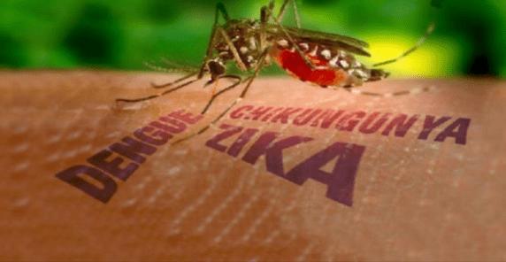 e-u-provoco-brote-de-dengue-hemorragico-en-cuba-en-1981 E.U Provocó Brote de Dengue Hemorrágico en Cuba en 1981.