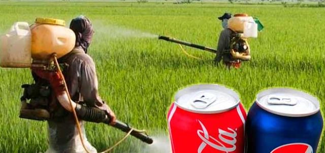 en-india-utilizan-coca-cola-y-pepsi-como-pesticidas En India utilizan Coca Cola y Pepsi como pesticidas