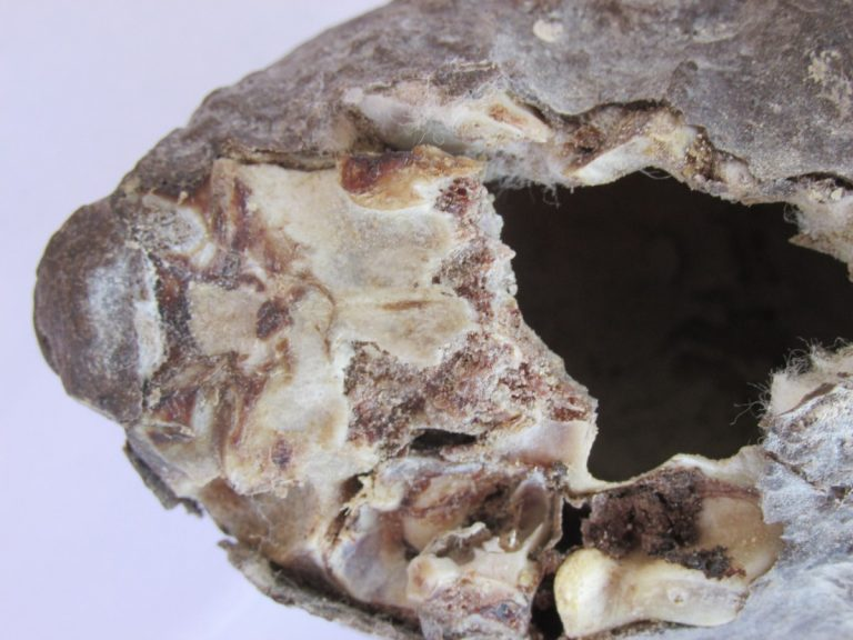 interesante-artefacto-del-desierto-peruano-espera-mayor-investigacion-1 INTERESANTE ARTEFACTO DEL DESIERTO PERUANO ESPERA MAYOR INVESTIGACION