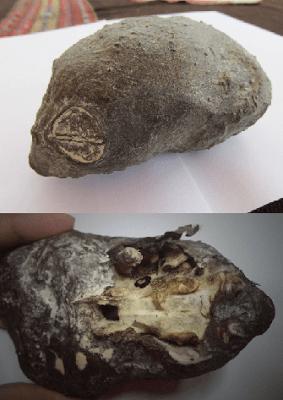 interesante-artefacto-del-desierto-peruano-espera-mayor-investigacion INTERESANTE ARTEFACTO DEL DESIERTO PERUANO ESPERA MAYOR INVESTIGACION