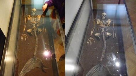 Descubrimientos hallan esqueletos de sirena! Vídeos.