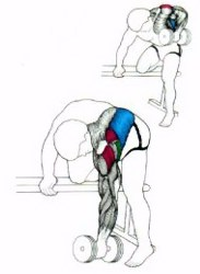 back exercises single arm rows