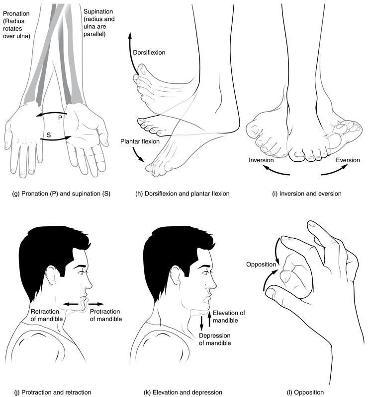 example 9 body diagram