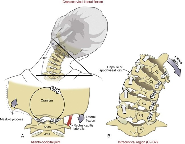 Structure and Function of the Vertebral Column Musculoskeletal Key