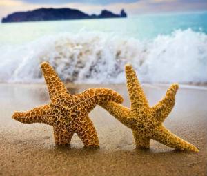 7009660-ocean-beach-starfish