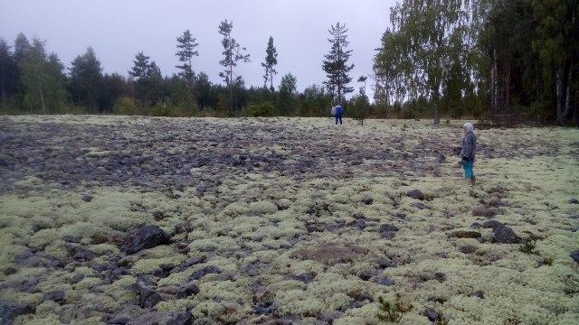 Народ ушел в лес. Фото: Татьяна Смирнова