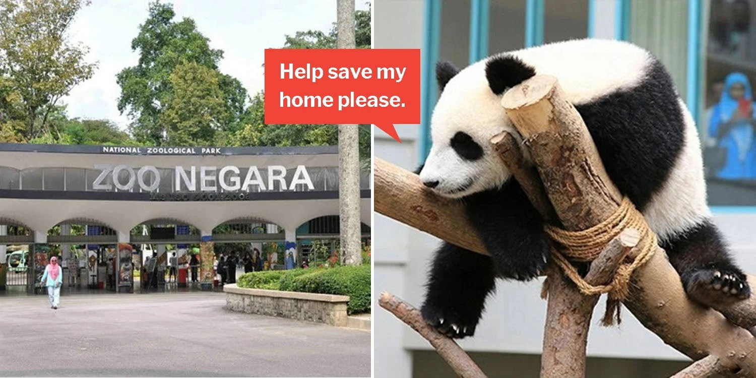 Harga Cat No Drop 2018 Malaysia S Zoo Negara Needs More Visitors Or It Ll Run Out Of