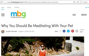 dog walking meditation