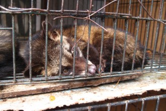 By surtr (Flickr: luwak (civet cat)) [CC BY-SA 2.0], via Wikimedia Commons