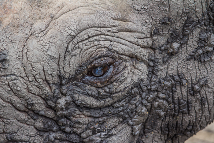 Ol_Pejeta_Animals-Rhino