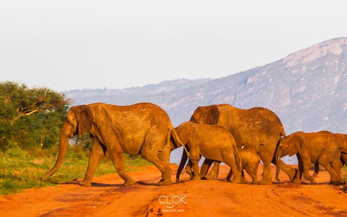 African Screens 10 – Tsavo Elephants Crossing
