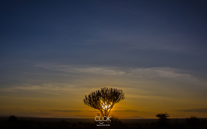 African Screens 11 – Tsavo Sunset