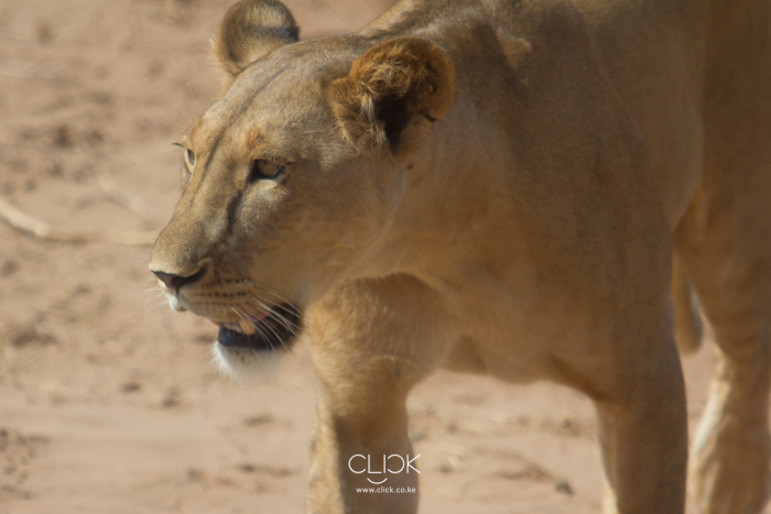 Samburu_National_Park-7
