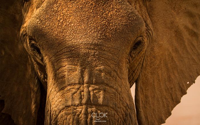 African_Screens_Wallpapers_Samburu_Elephant_Blog700px