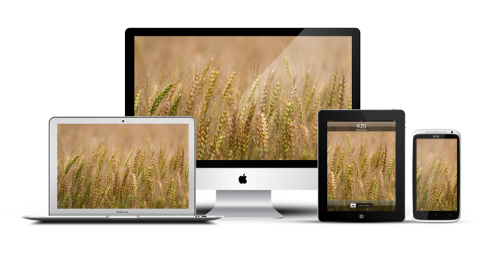 African_Screens_Wallpapers_Timau_Wheat_Devices