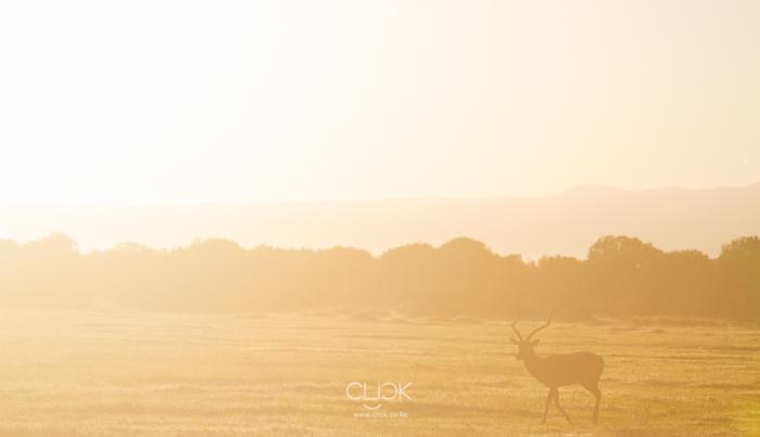 Sunrise at Ol Pejeta Conservancy.