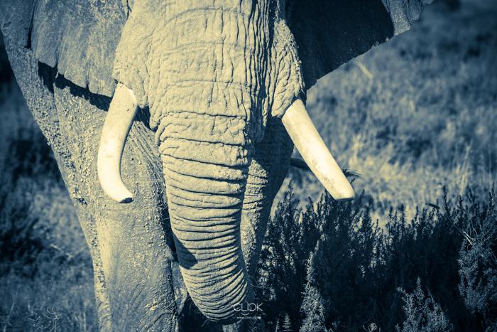 Amboseli_Onetouch_Live-10