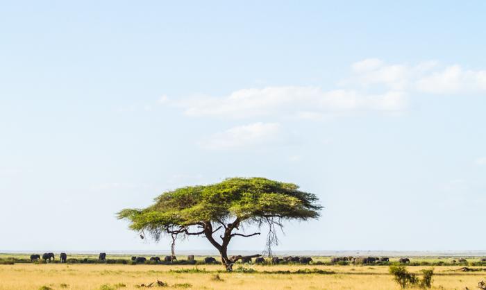 Amboseli_Onetouch_Live-11