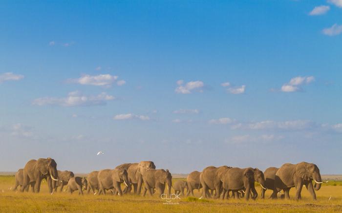 Amboseli_Onetouch_Live-17