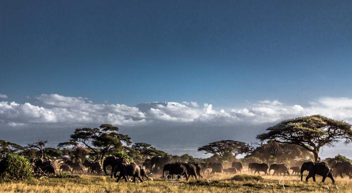 Amboseli_Onetouch_Live-21