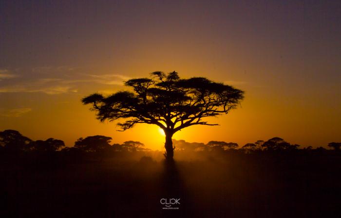 Amboseli_Onetouch_Live-25