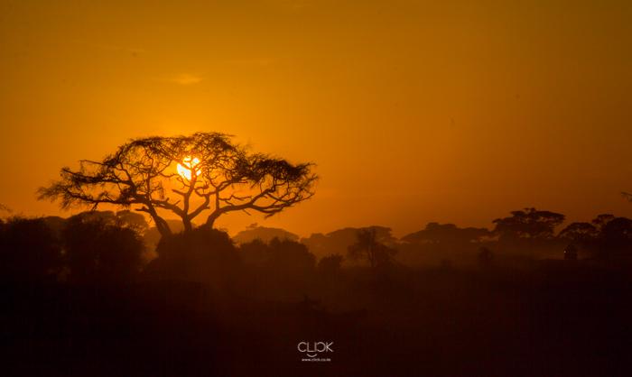 Amboseli_Onetouch_Live-26