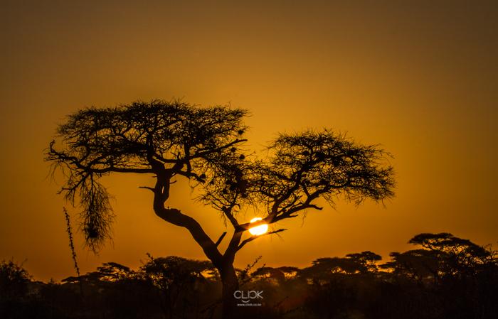 Amboseli_Onetouch_Live-31